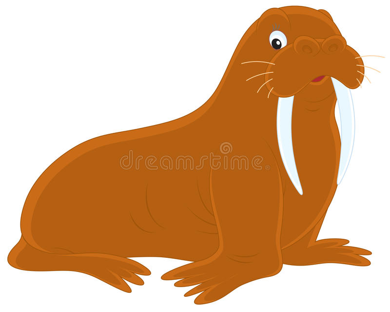 Walrussen stock illustratie
