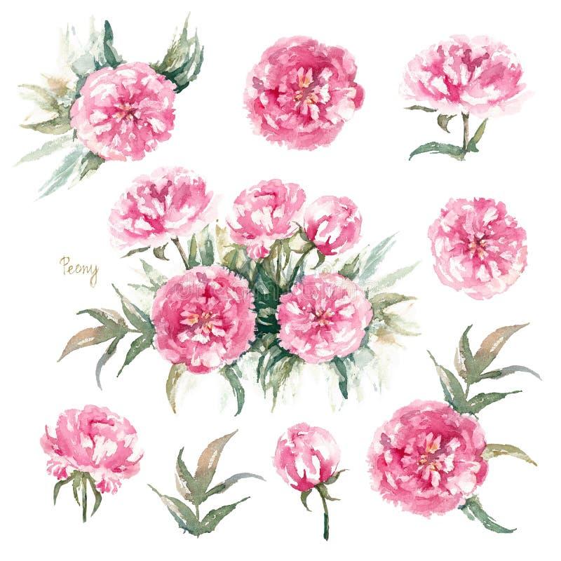 Walter Faxon Peony Grupo isolado de peônias cor-de-rosa vívidas com flores, os botões e as folhas dobro Cart?o do vintage ilustração do vetor