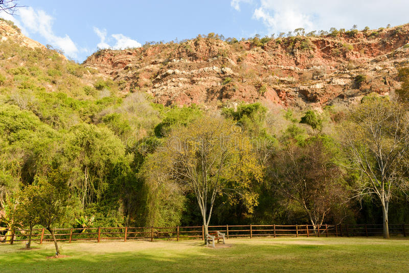 Walter Sisulu National Botanical Garden royalty-vrije stock foto