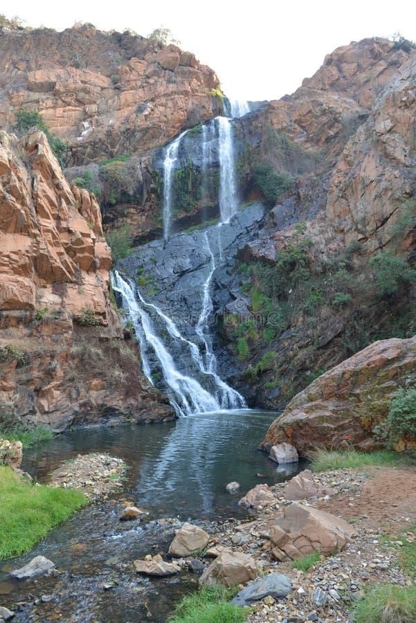 Walter Sisulu National Botanical Garden, Johannesburgo, Afr del sur imagen de archivo libre de regalías