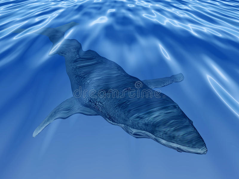 Walvis in het diepe blauwe overzees vector illustratie