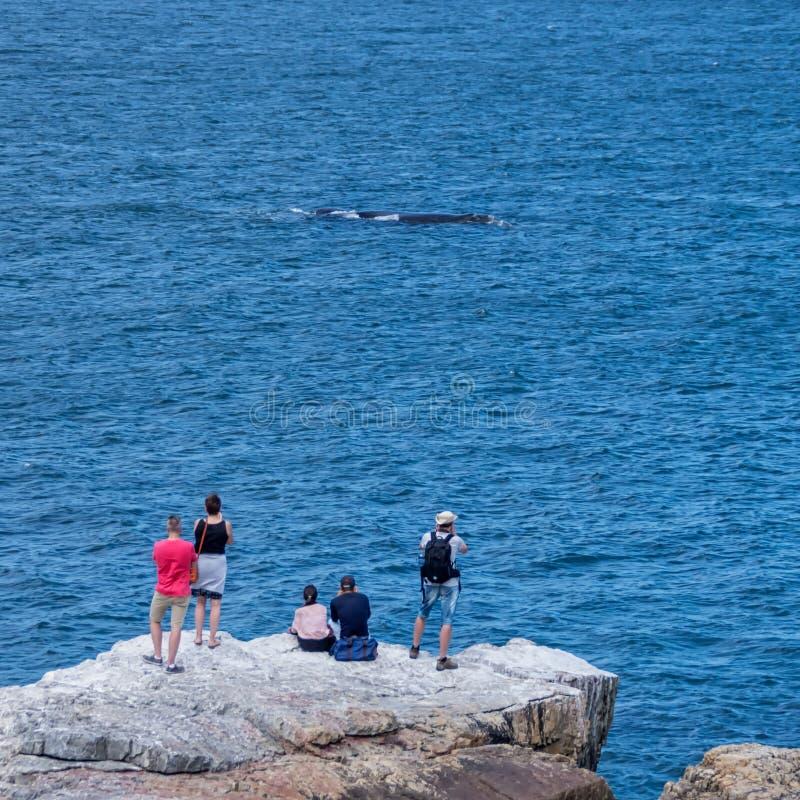 Walvis het Letten op royalty-vrije stock afbeeldingen