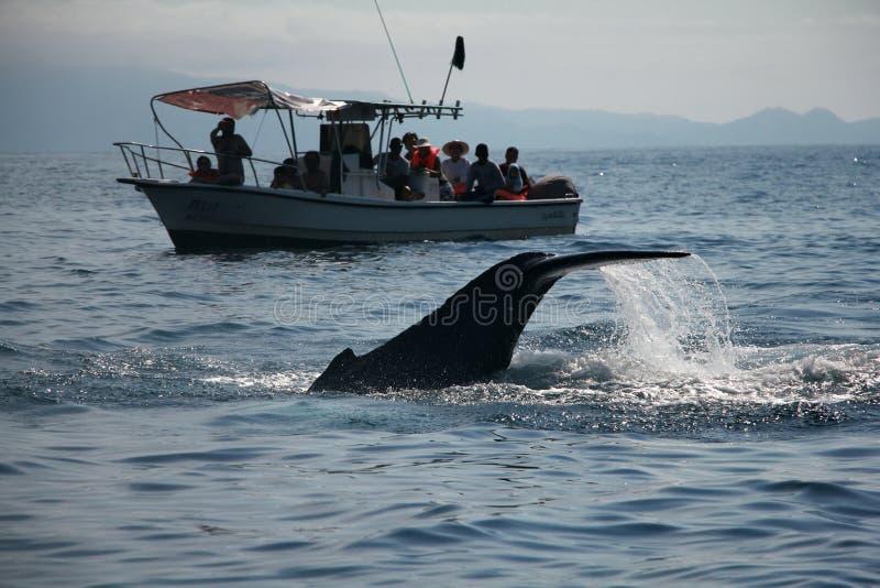 Walvis het Letten op stock afbeeldingen