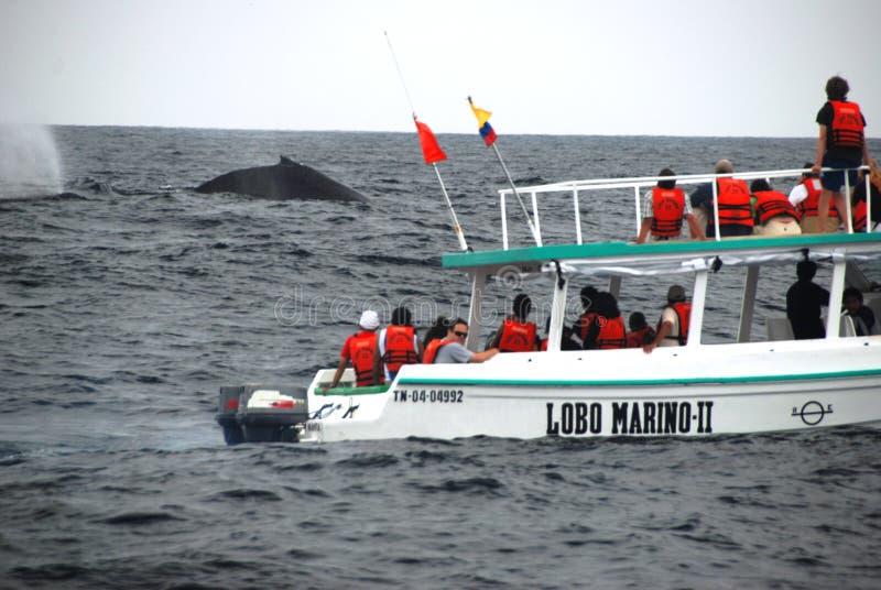 Walvis-lettende op boot stock foto
