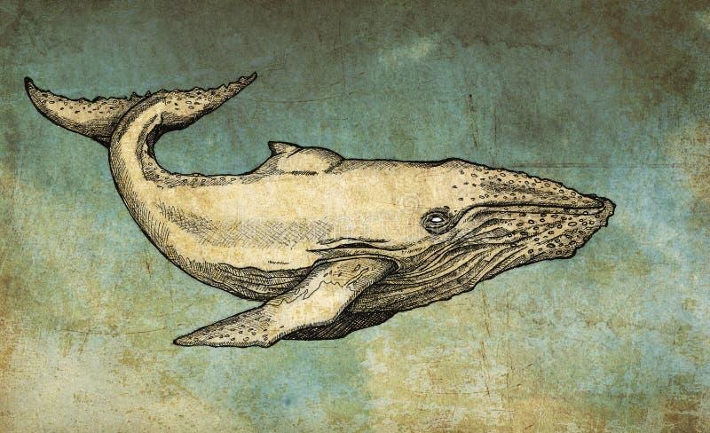 Walvis overzeese grafische dierlijke textuur royalty-vrije stock afbeeldingen