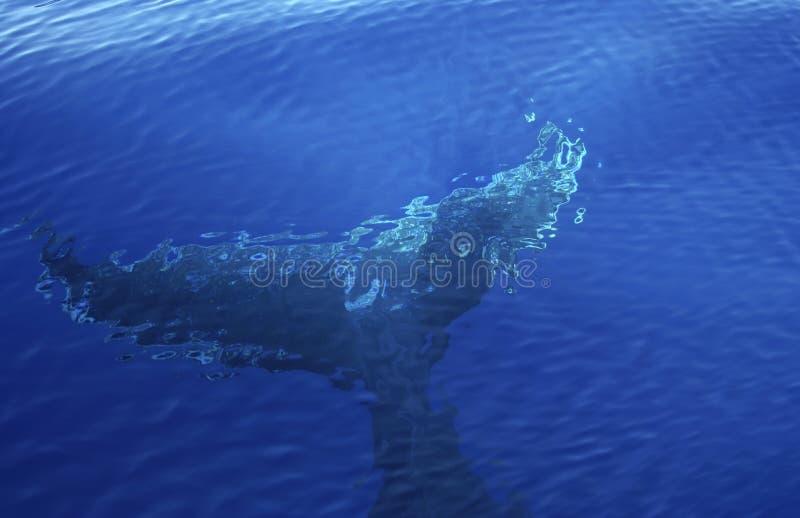 Walvisachtergrond stock afbeelding