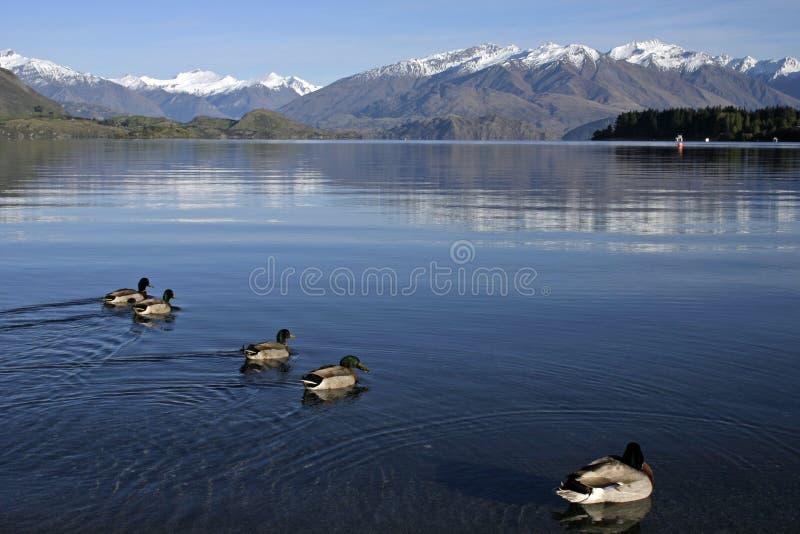 wanaka озера стоковые фото