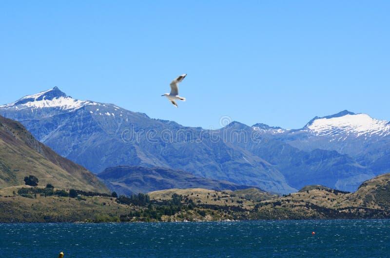 Download Wanaka - New Zealand stock image. Image of snow, landmark - 38213705