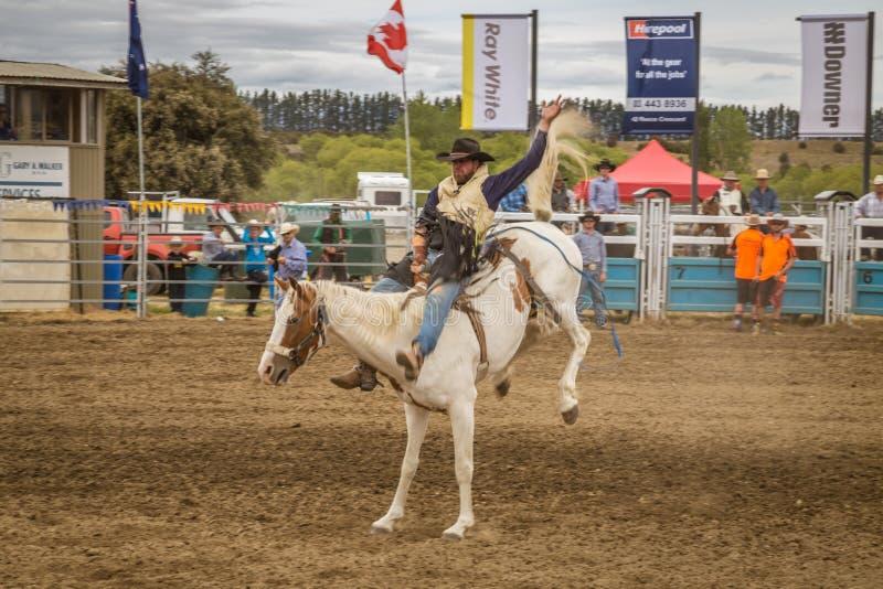WANAKA, NOWA ZELANDIA - 2017, STYCZEŃ 2: Kowboj uczestniczy wewnątrz i zdjęcie royalty free
