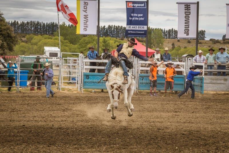WANAKA, NUOVA ZELANDA - 2 GENNAIO 2017: Il cowboy partecipa ad una concorrenza di equitazione di bronc della sella nel cinquantaq immagini stock