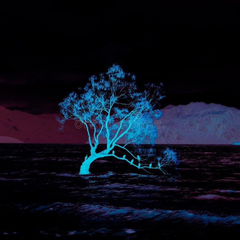 Wanaka tree mountain new zealand royalty free stock images