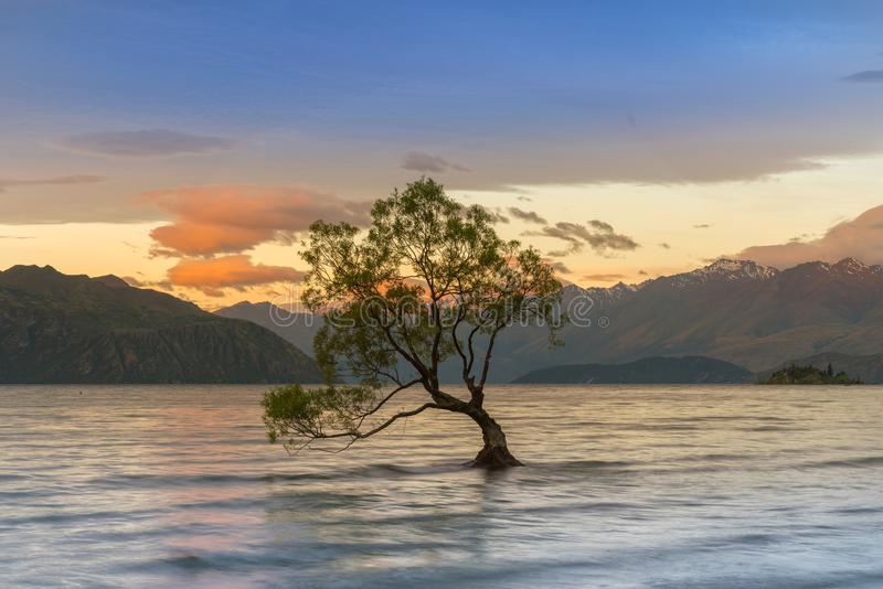 Wanakaboom over Wanaka-Meer tijdens zonsopgang, het Zuideneiland van Nieuw Zeeland royalty-vrije stock foto's