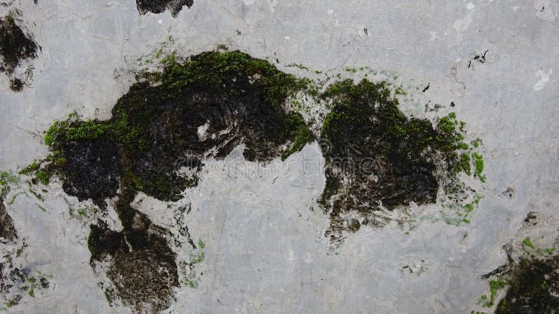 Wand abgefressen durch Pilze, ein netter Hintergrund lizenzfreie stockfotografie