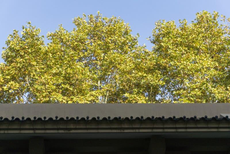 Wand-Dach lizenzfreies stockfoto