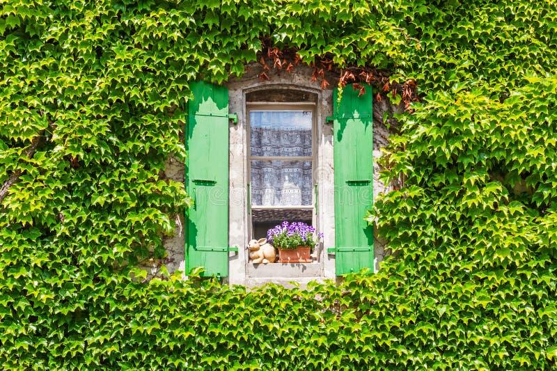 Wand eines Hauses mit dem Fenster bedeckt mit Efeu stockfotografie