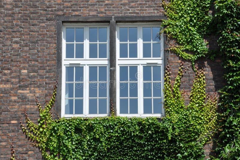 Wand mit der Fensterwand bedeckt durch Efeu lizenzfreie stockfotografie