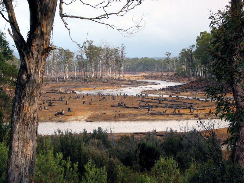 wandalizm tasmańskie ekologicznej lasów obraz royalty free