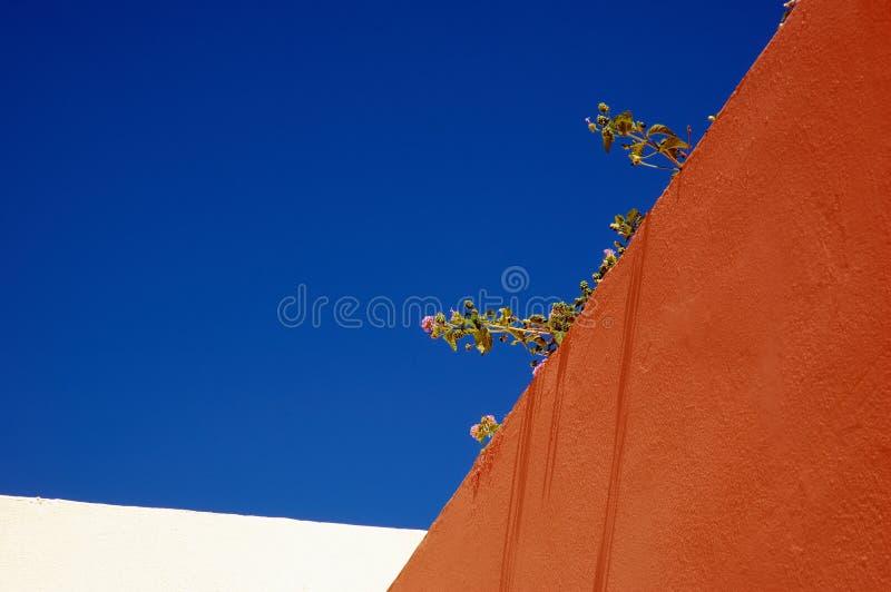 Wandblumen lizenzfreie stockfotos