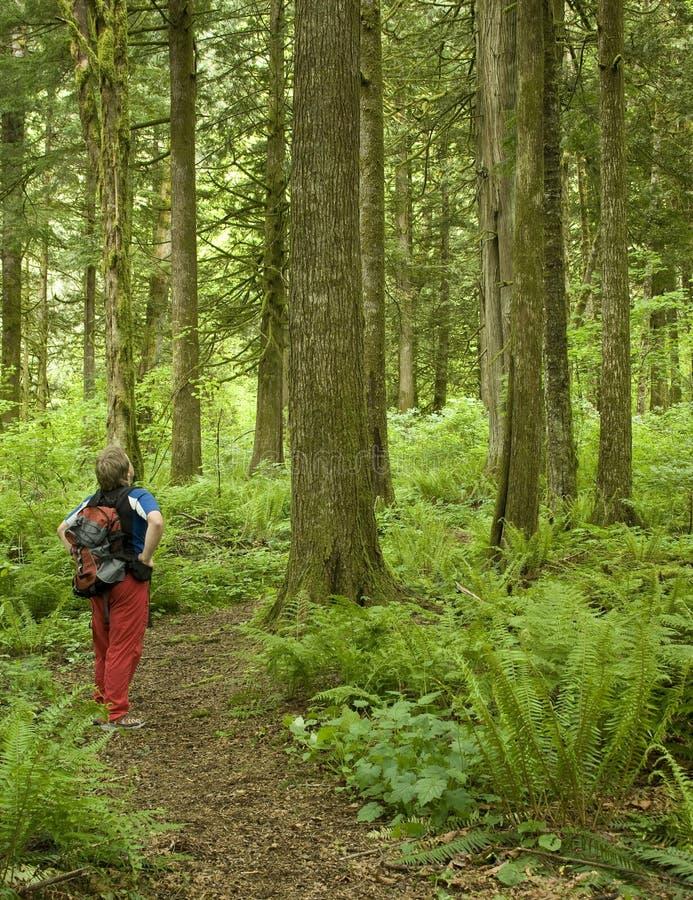 Wandelaar die langs een bosweg pauzeert royalty-vrije stock foto's