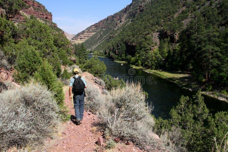 Wandelaar door Groene Rivier in Utah stock fotografie