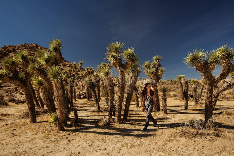 Wandelaar in het nationale park van de joshuaboom stock foto