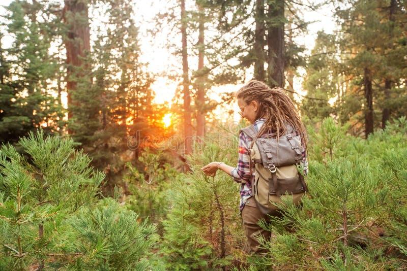 Wandelaar in Sequoia nationaal park in Californië, de V.S. royalty-vrije stock fotografie