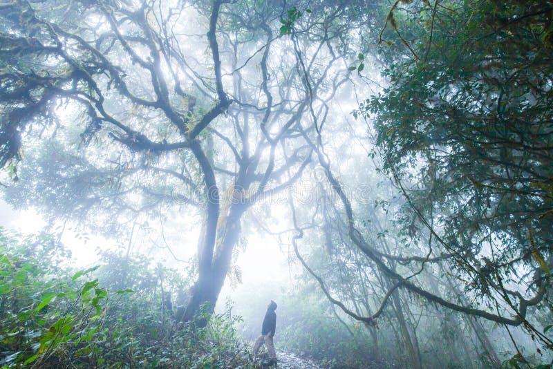 Wandelaarmens die in regenjas in verrukte oude tropisch benieuwd zijn royalty-vrije stock afbeelding