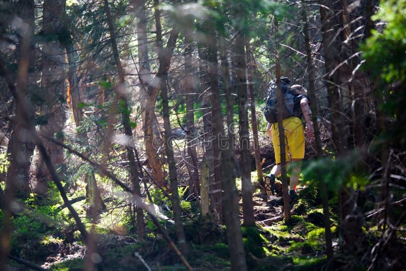Wandelaars op een sleep in een hout stock afbeelding