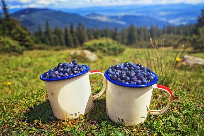 Wandelend in de bergen, de zomervakantie Twee koppen van blueberri royalty-vrije stock fotografie