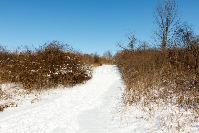 Wandelend voetpad door het koude winterbos stock afbeelding