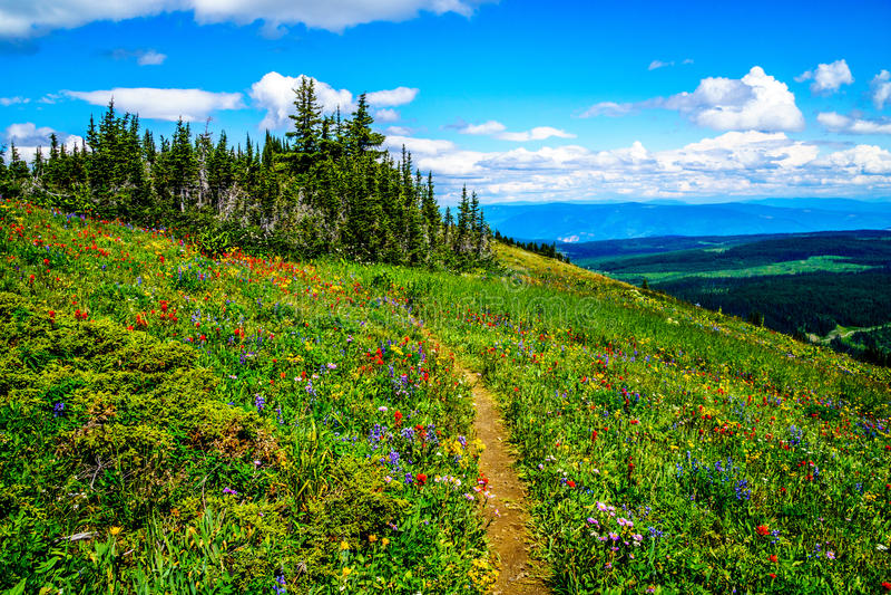 Wandeling door de berg alpiene weiden met wilde Bloemen op Tod Mountain royalty-vrije stock fotografie
