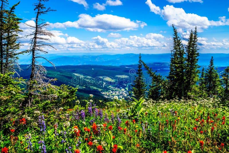 Wandeling door de berg alpiene weiden met wilde Bloemen op Tod Mountain stock foto