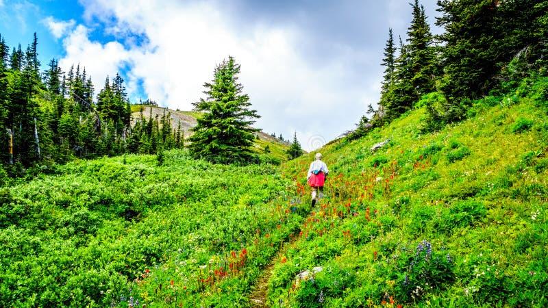 Wandeling door de hoge Alpiene die Weiden in Wilde Bloemen tot de bovenkant van Tod Mountain worden behandeld stock foto