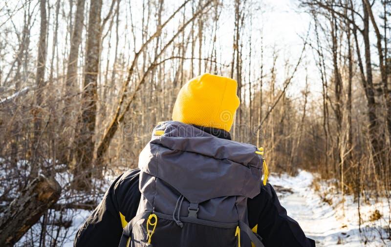 Wandeling: Een mens in een gele hoed gaat wandelend in een de winterbos en draagt een grote grijze rugzak Mening van de rug stock afbeeldingen