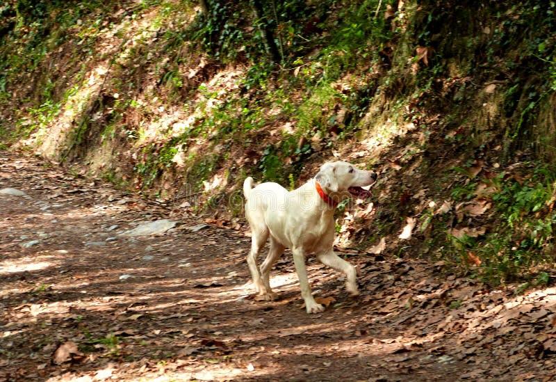 Wandeling in Gualba ( Montseny) royalty-vrije stock foto's
