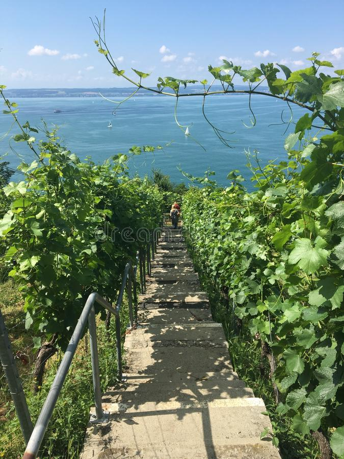 Wandeling in meersburg bij een vineyyard stock foto