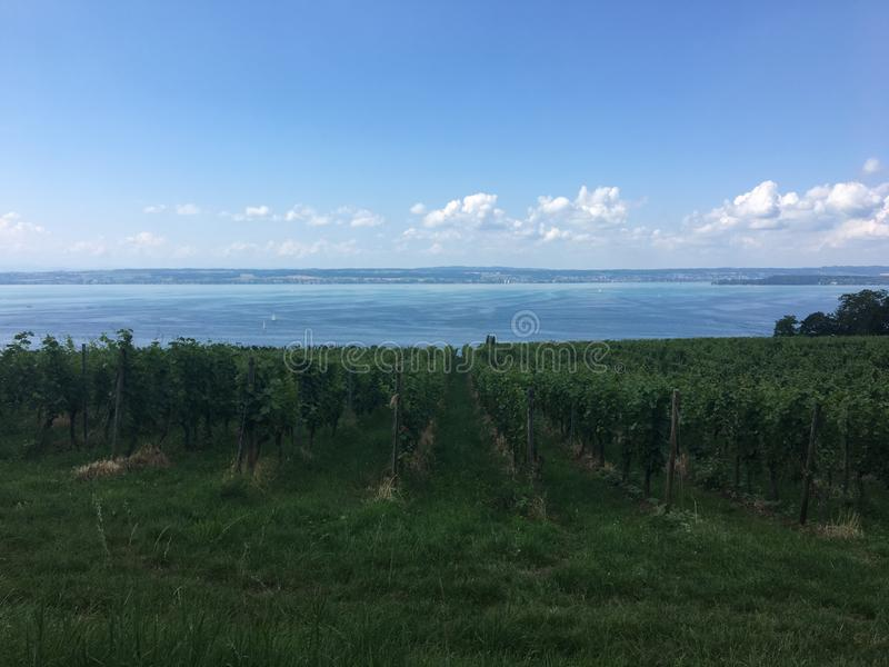 Wandeling in meersburg bij een vineyyard royalty-vrije stock foto's