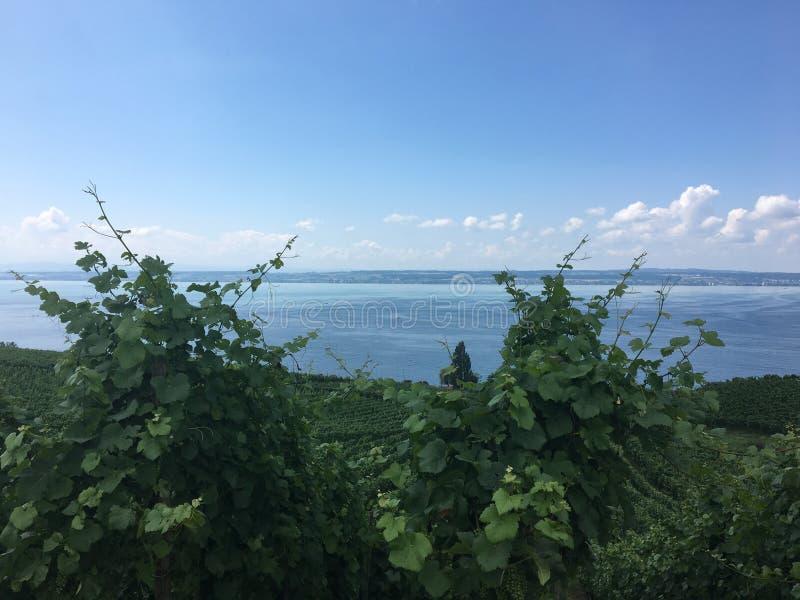 Wandeling in meersburg bij een vineyyard royalty-vrije stock afbeeldingen