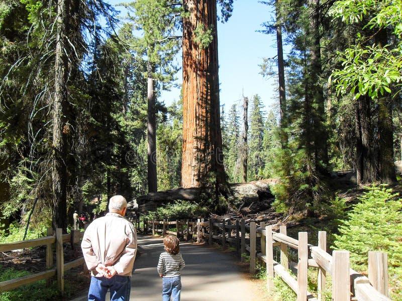 Wandeling van het sequoia de Nationale Park door het bos royalty-vrije stock foto's