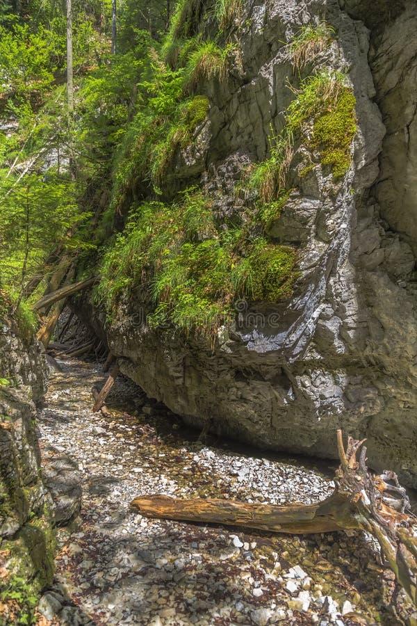 Wandelingssleep in het park Slowaakse Paradijs stock foto's