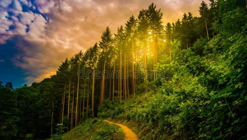 Wandelingsweg en zonsondergang in mooi houtpanorama, inspirational de zomerlandschap in bos royalty-vrije stock foto's