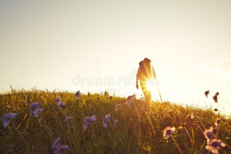 Wanderer луга лета подсвеченный стоковое изображение