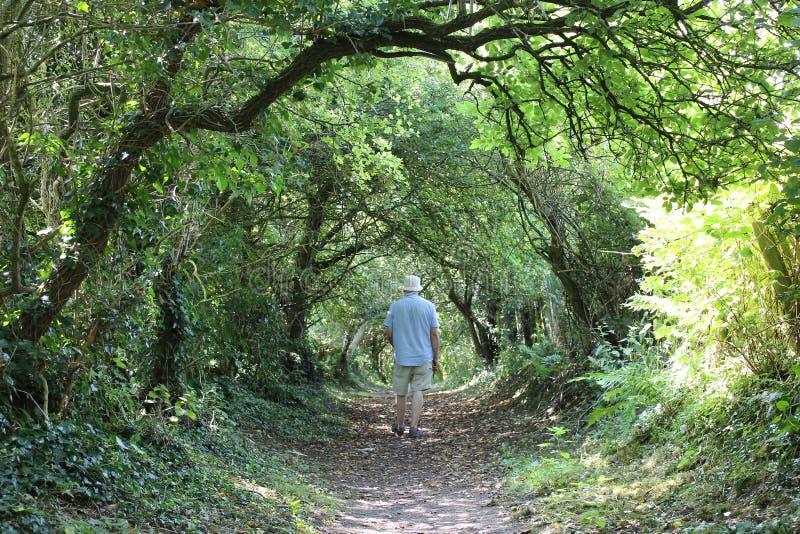 Wanderer auf dem Fußweg gestaltet durch Bäume am Sommertag lizenzfreie stockfotos
