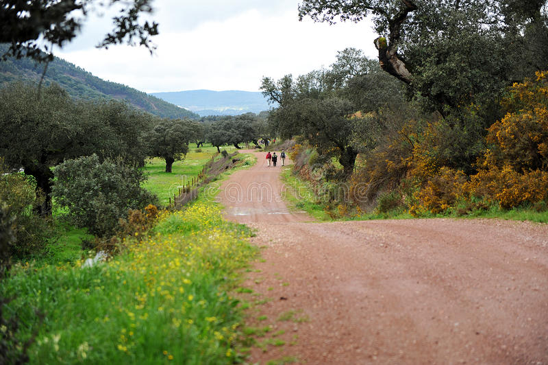 Wanderer auf der Sierra Naturpark Des Aracena, Huelva, Spanien stockfotografie