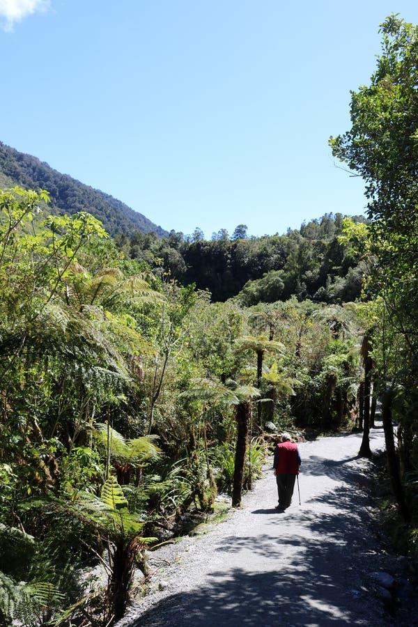 Wanderer auf Fußweg durch Baumfarne, Neuseeland lizenzfreie stockfotos