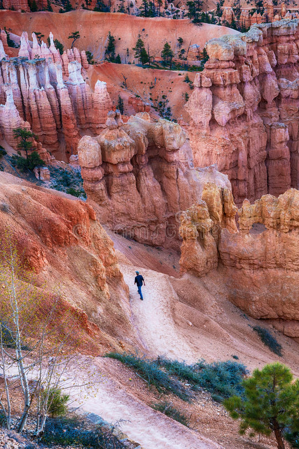 Wanderer auf Spur in Bryce Canyon National Park, Utah stockbilder