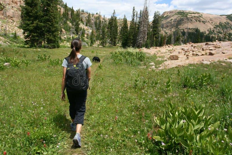 Wanderer in den Bergen stockbild