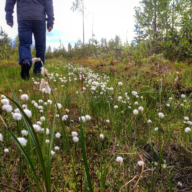 Wanderer, der aufwärts im langen Gras mit flaumigen Blumen wandert lizenzfreie stockfotos