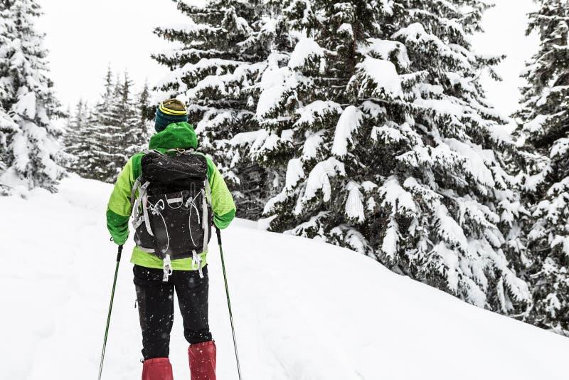 Wanderer, der im schneebedeckten Wald des weißen Winters wandert lizenzfreies stockfoto