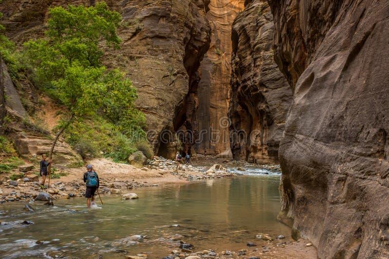 Wanderer, die durch den Jungfrau-Fluss waten, wie er seine Weise durch die großartigen und erstaunlichen Engen spinnt, Zion Natio lizenzfreies stockbild